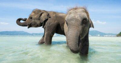 Fotomural Dos elefantes bebé en el mar. Edición de la bandera.
