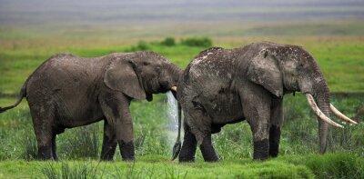 Fotomural Dos elefantes en Savannah. África. Kenia. Tanzania. Serengeti. Maasai Mara. Una excelente ilustración.