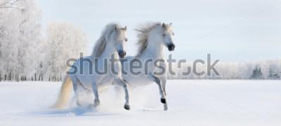 Fotomural Dos galés blancos ponis galés en campo de nieve