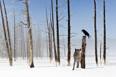Fotomural Dos segundos de vida - Lobo y cuervo