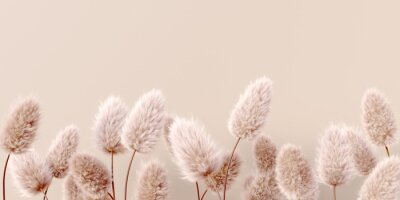 Fotomural Dry fluffy flowers beige pastel color boho background 3d rendering. Abstract Pampas grass isolated - calm floral wallpaper.