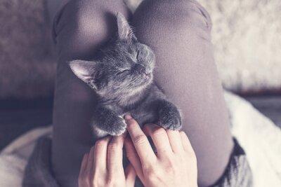 Fotomural Dulce Gatito que toma una siesta
