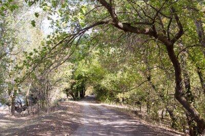 Fotomural El camino en el bosque