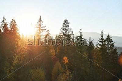 Fotomural El paisaje de otoño de montaña con bosque colorido. Escena dramática de la mañana, hojas de otoño rojas y amarillas. Lugar lugar Cárpatos, Ucrania, Europa.
