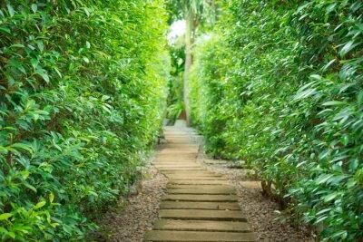 Fotomural El sendero en el jardín