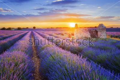 Fotomural El sol se está poniendo sobre una hermosa lavanda púrpura archivada en Valensole. Provence, Francia