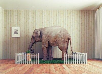 Fotomural Elefante de ternero - mascota