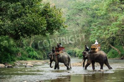 Fotomural Elefante de trekking a través de la selva en el norte de Tailandia