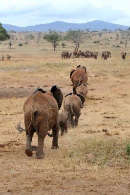 Fotomural Elefante en el Parque Nacional de Kenia