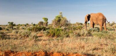 Fotomural Elefante en el Parque Nacional del este de Tsavo, Kenia