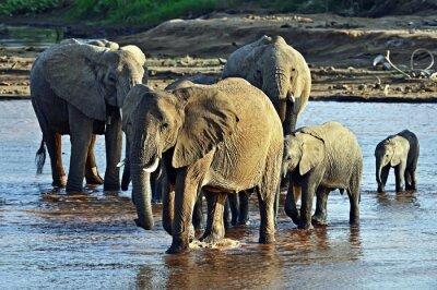 Fotomural Elefante en la sabana