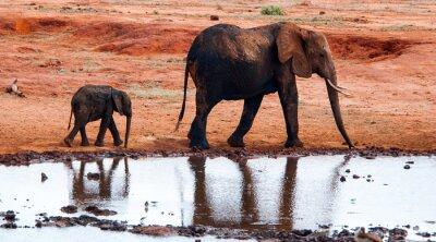 Fotomural Elefante en Parque Nacional del este de Tsavo