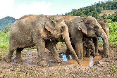 Fotomural Elefante rebaño con un bebé elefante en un billabong