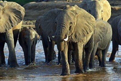 Fotomural Elefantes africanos en la sabana