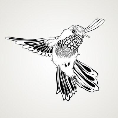 Fotomural Estilo dibujado mano del vintage del pájaro del tarareo del vuelo.
