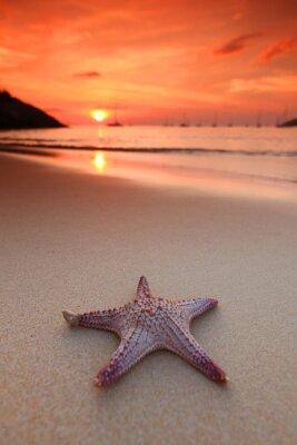 Fotomural Estrellas de mar en la playa