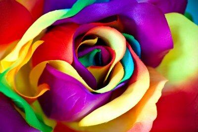 Fotomural fake flor color de rosa