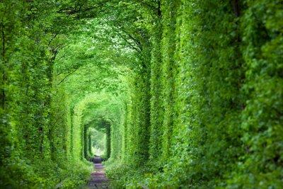 Fotomural Fantástico túnel real de amor, árboles verdes y el ferrocarril