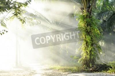 Fotomural Farola de niebla de palma Farm Day Outdoor