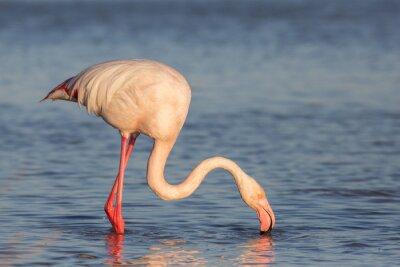 Fotomural Flamingo, Camargue, Francia