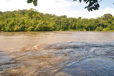 Fotomural Fleuve d'amazonie