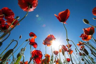 Fotomural Flor de la amapola