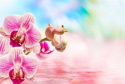 Fotomural Flor de la orquídea de cerca