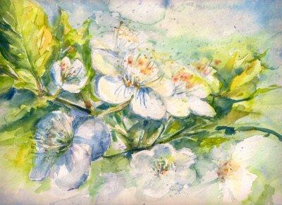 Fotomural Floración de la rama del árbol de cerezo acuarela pintado