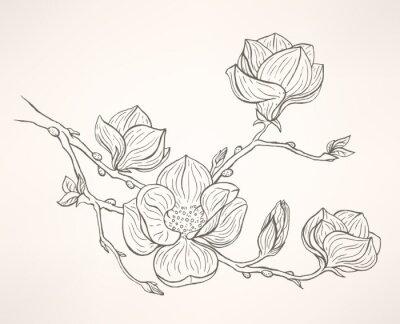 Fotomural floración magnolia