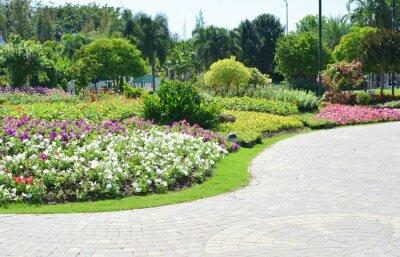 Fotomural Flores coloridas en el jardín