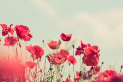 Fotomural Flores de la amapola retro pacífica de antecedentes de verano