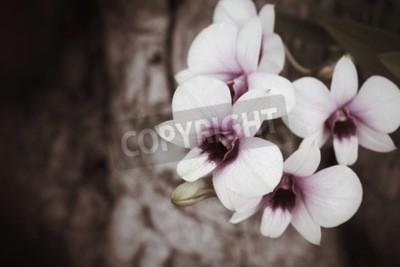 Fotomural Flores de la orquídea del vintage