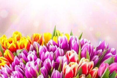 Fotomural Flores hermosas del tulipán