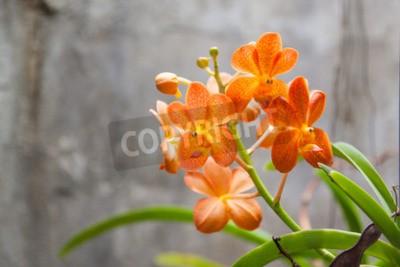 Fotomural Flores naranjas de la orquídea