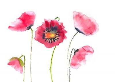 Fotomural Flores rojas hermosas de la amapola, pintura de la acuarela