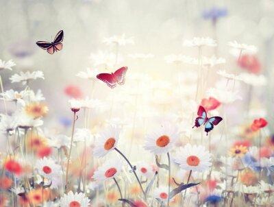 Fotomural Flores silvestres en un prado