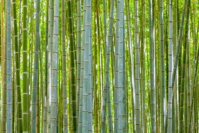 Fotomural fondo de bambú en la naturaleza en día