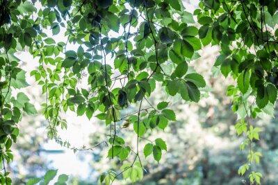 Fotomural fondo de hojas verdes