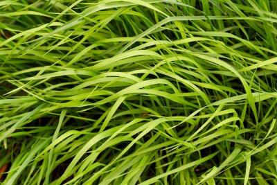 Fotomural Fondo de la hierba verde