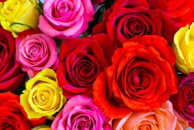 Fotomural Fondo de las rosas