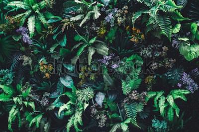 Fotomural Fondo de naturaleza hermosa de jardín vertical con hoja verde tropical