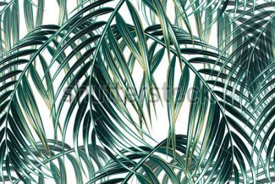 Fotomural Fondo de patrón floral de vector transparente de hojas de palma tropical