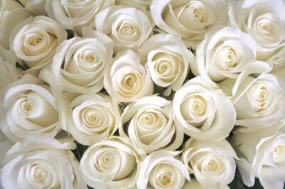 Fotomural Fondo de rosas blancas