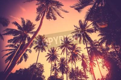 Fotomural Fondo entonado de la vendimia del día de fiesta hecho de siluetas de la palmera en la puesta del sol.