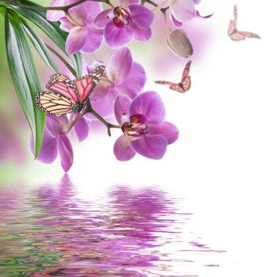 Fotomural Fondo floral de orquídeas tropicales y la mariposa