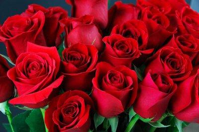 Fotomural Fondo rosa roja