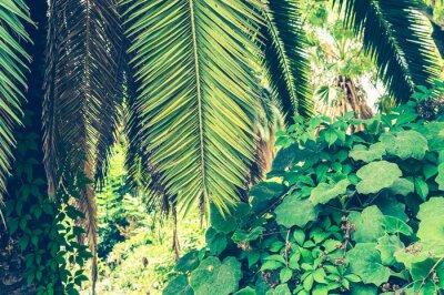 Fotomural Fondo tropical de hojas de palma