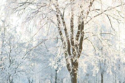 Fotomural Fondos de árboles con las ramas de un árbol helado en un día de invierno