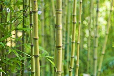 Fotomural Fondos verdes de la naturaleza del bambú