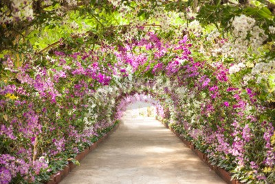 Fotomural footpath in a botanical garden with orchids lining the path.